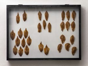 Sammlung 2, 1995, Latex, Glas, Metall, 101 x 75 x 12cm - Wolfgang Stiller