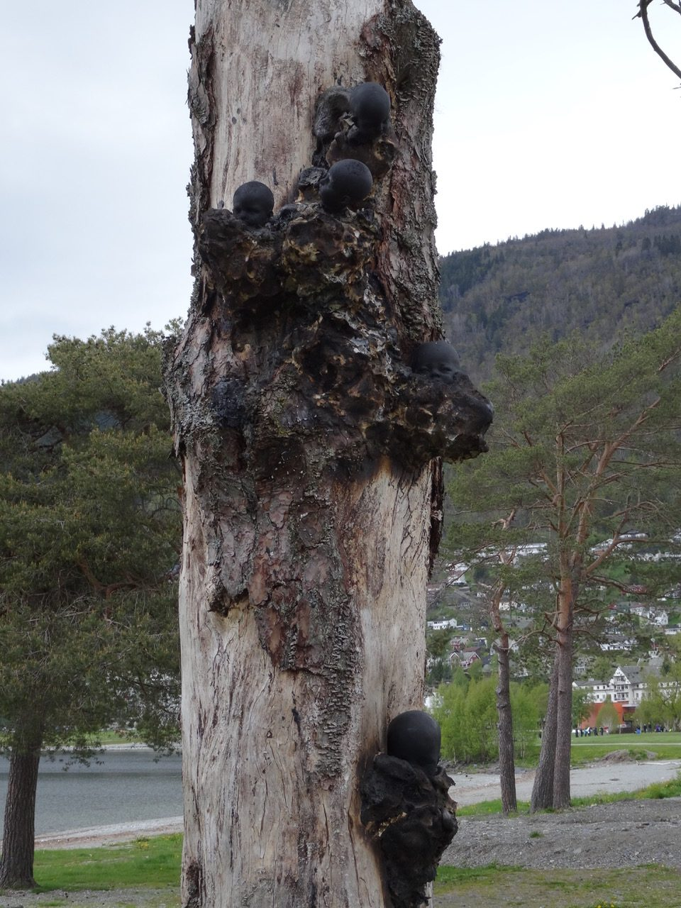 little suckers 2015, Agalaus art festival Voss, Norway - Wolfgang Stiller
